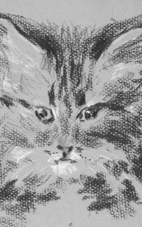 Gato, 1956.